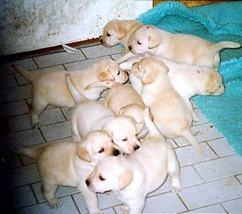 the entire litter